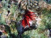 Different Types Worms Won't Find Your Garden