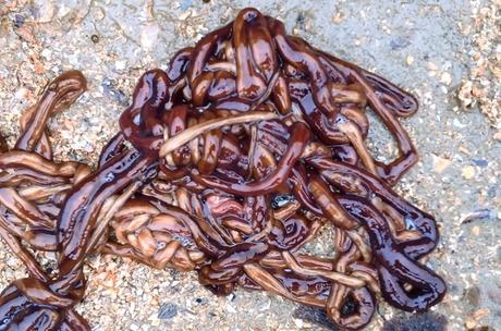 Ten Different Types of Worms You Won't Find in Your Garden