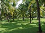 Spectacular Palm Trees That Provide Shade