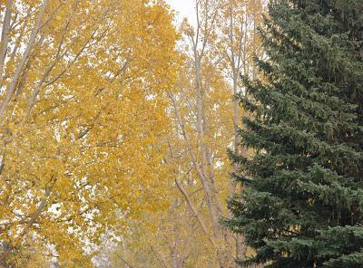 Trees Turning, Trees Burning