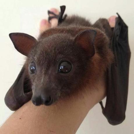 Ten Tips for Encouraging Bats Into Your Garden