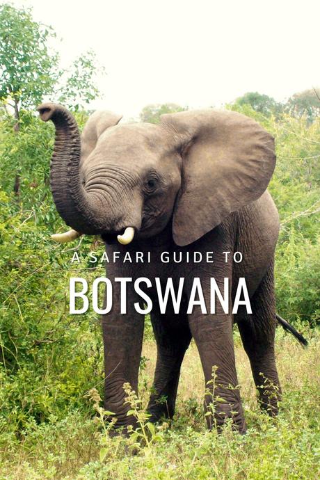 A Superb Botswana Safari Guide