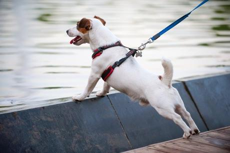 How To Choose A Good Dog Harness? Different Types and Styles