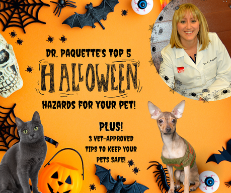 Ask a Vet: Top 5 Halloween dangers to your pets PLUS 3vet-approved tips to keep them safe