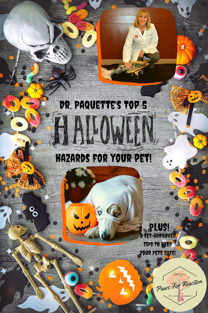 Halloween Hazards: Vet approved tips to keep pets safe on the spookiest night of the year