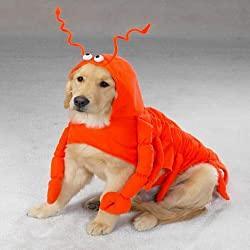 Image: Casual Canine Lobster Paws Dog Halloween Costume MEDIUM | Brand: Chom