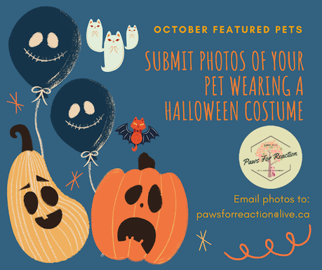 October featured pets: We want to feature your pet's Halloween costume