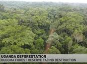Support Campaign Save Bugoma Forest?