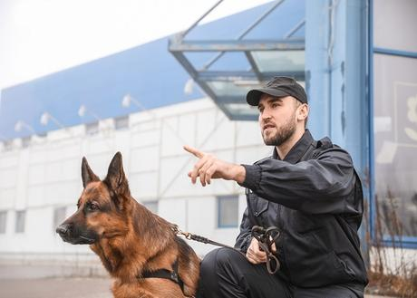 When Should You Choose the Security Guard With a Dog as A Solution?