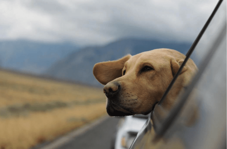 What You Need to Travel with Your Pet This Fall