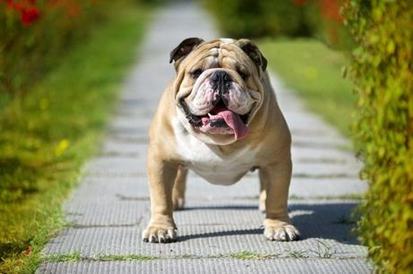 The 10 Most Adorable and Gentle Dog Breeds
