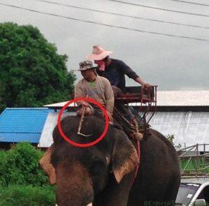 COVID-19 Is Killing Elephants in Southeast Asia