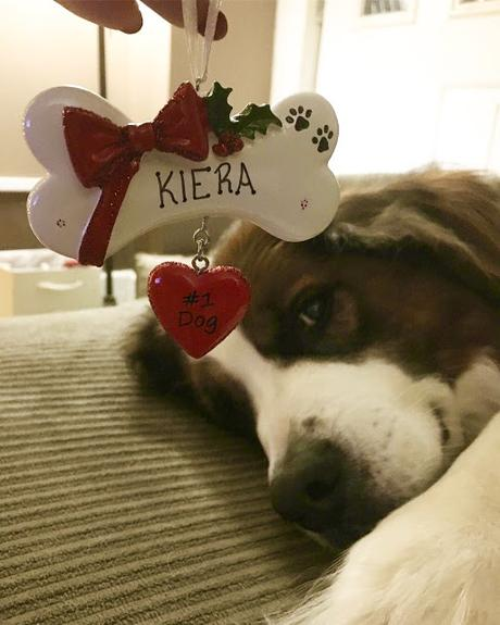 How to cope: The first Christmas after losing a pet