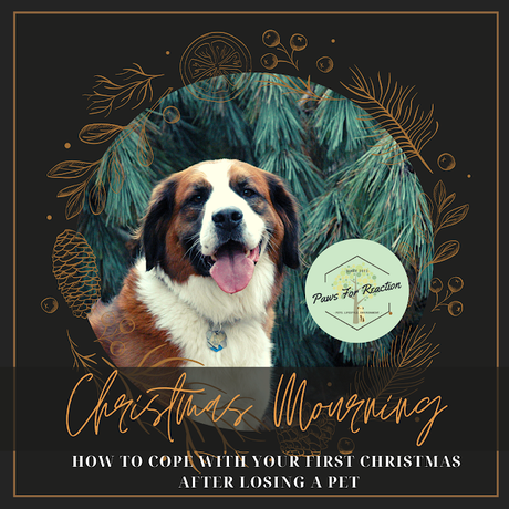 Christmas mourning: How to cope with your first holiday season after losing a pet