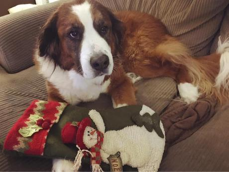 Pet loss & support: Grief & the first Christmas after losing a pet
