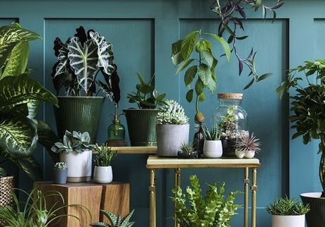How To Grow Healthy Plants In Your Home