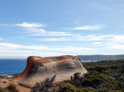 What Animals Live Kangaroo Island?