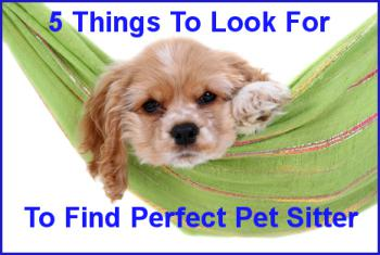 5 Qualities To Look For In Pet Sitters