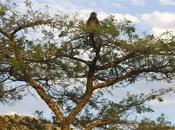 South African Wildlife: Beyond