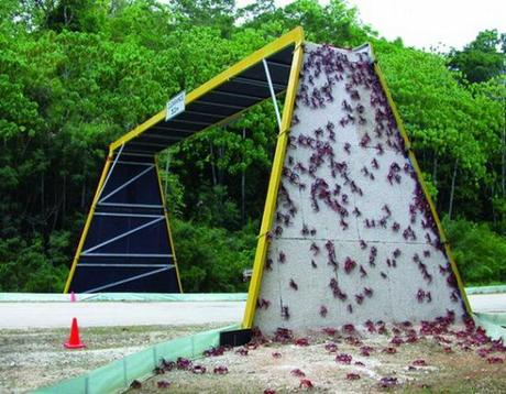 Crab overpass on Christmas Island, Austrailia: image via abc.net.au