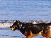 Best Dog-friendly Destinations