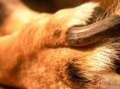 Tips Protect Your Dog's Paws From Pavement