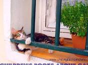 Book Sharing Monday{5 Children's Books About Cats}
