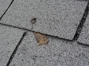 Another Common Roof Installation Defect: Short Nails