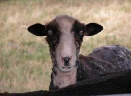 [Image: furry-fuhrers-8-animals-who-look-like-hi...9mii4.jpeg]