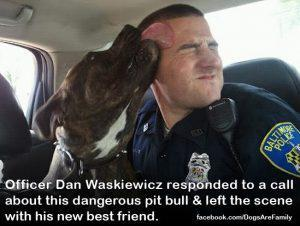 Pit bulls are good dogs