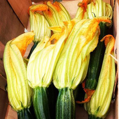 Wilder Pictures + Recipes: Farmer's Market Series, Volume VI (and) Roast Summer Squash