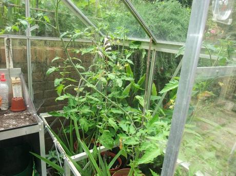 The Greenhouse Year – July 2012