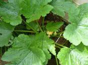 (Vegetable) Garden's Gone