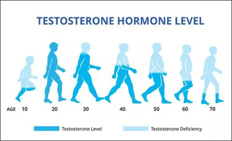 What are the Consequences of Low Bioavailable Testosterone level & What is the Natural Solution?