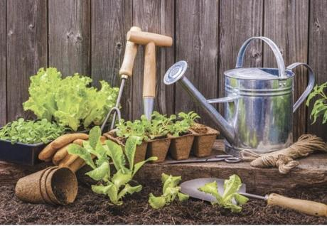 Handy Gardening Tips for Beginners