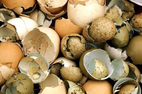 broken-egg-shells