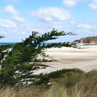 A photograph of a golden beach and turquoise blue sea, below a blue sky; in the foreground are plants and grasses on a sand dune.