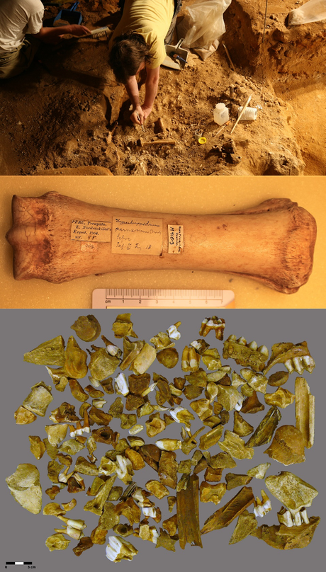 Ancient bones — how old?