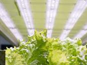 Best Vegetables Grow Indoors Under Lights