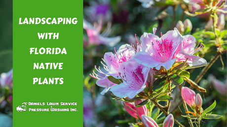 Landscaping with Florida Native Plants