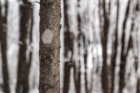 Walking (and Skiing and Snowshoeing) in a Winter Wonderland