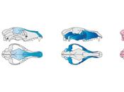 Job: Research Associate Mammalian Morphology-Environment Interactions