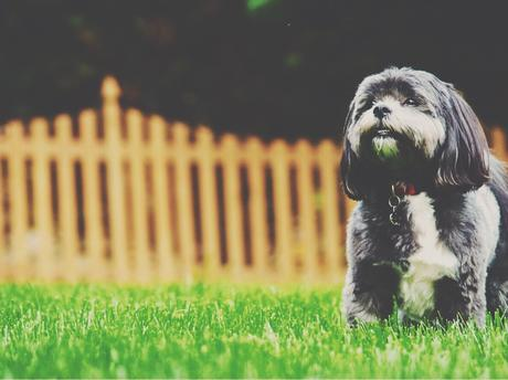 How to Keep Your Family Dog Healthy
