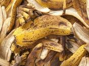 Recycle Banana Peels? (And Them Compost?)