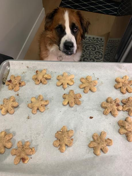 February 23 is National Dog Biscuit Day: Peanut butter & jam dog treat recipe
