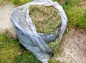 Compost Grass Clippings? (And Creative Ways Them)