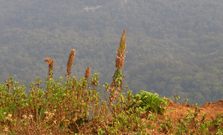Mullayanagiri Hill, Chikmagalur – bewitching beauty amidst the peaks
