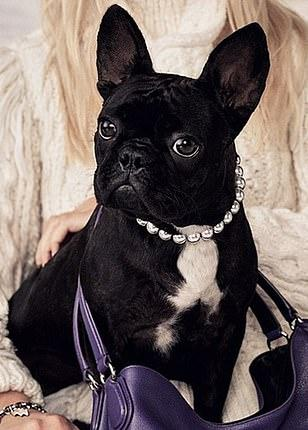 Lady Gaga's dogs stolen and she offers reward of Rs.3.63 Cr (approx) for finding out !!