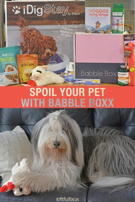 Six Ways to Spoil Your Pet