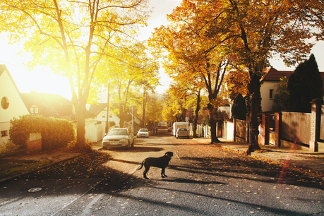 Moving to the Suburbs from The City: Tips to Make it Happen